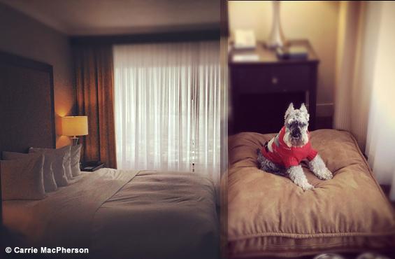 Hilton quebec animal friendly hotel