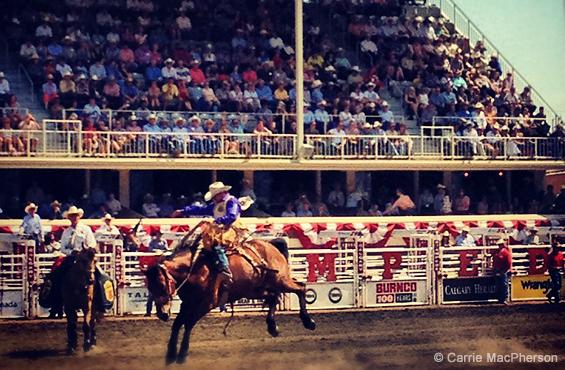 Bronco rider calgary stampede 2012
