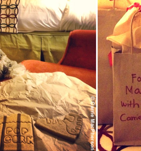 (English) This little doggy went to Stowe Mountain Lodge