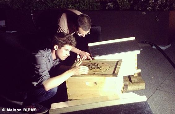 Birks urban beekeeping